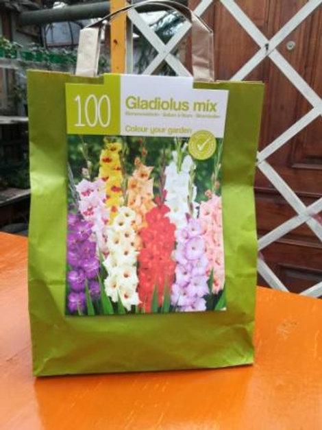 Гладиолус палитра красок (в упаковке-100шт)