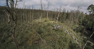 ACID-FOREST_Still_10_small.jpg