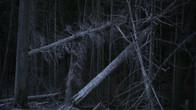 ACID-FOREST_Still_9_small.jpg