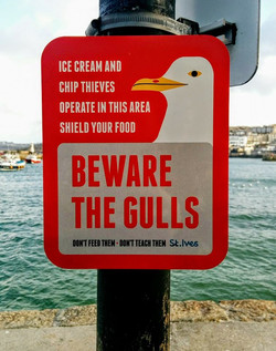 Beware the Gulls!