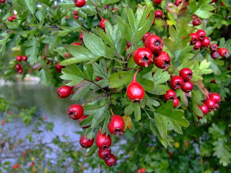 hawthornberry2010