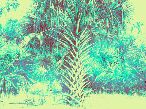 Blue Shoreline