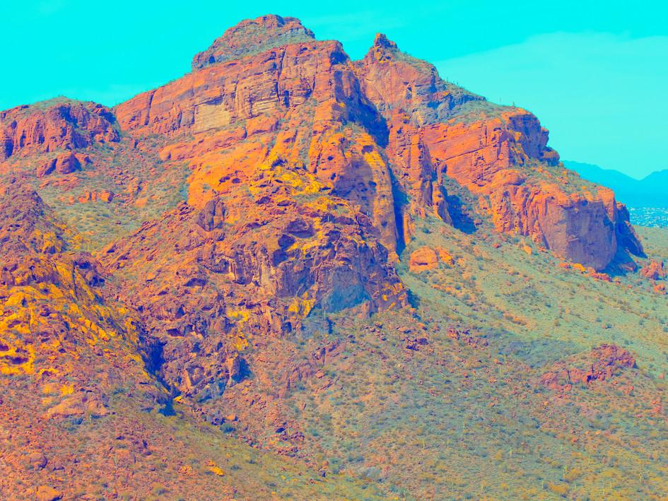 Bravest Saguaro