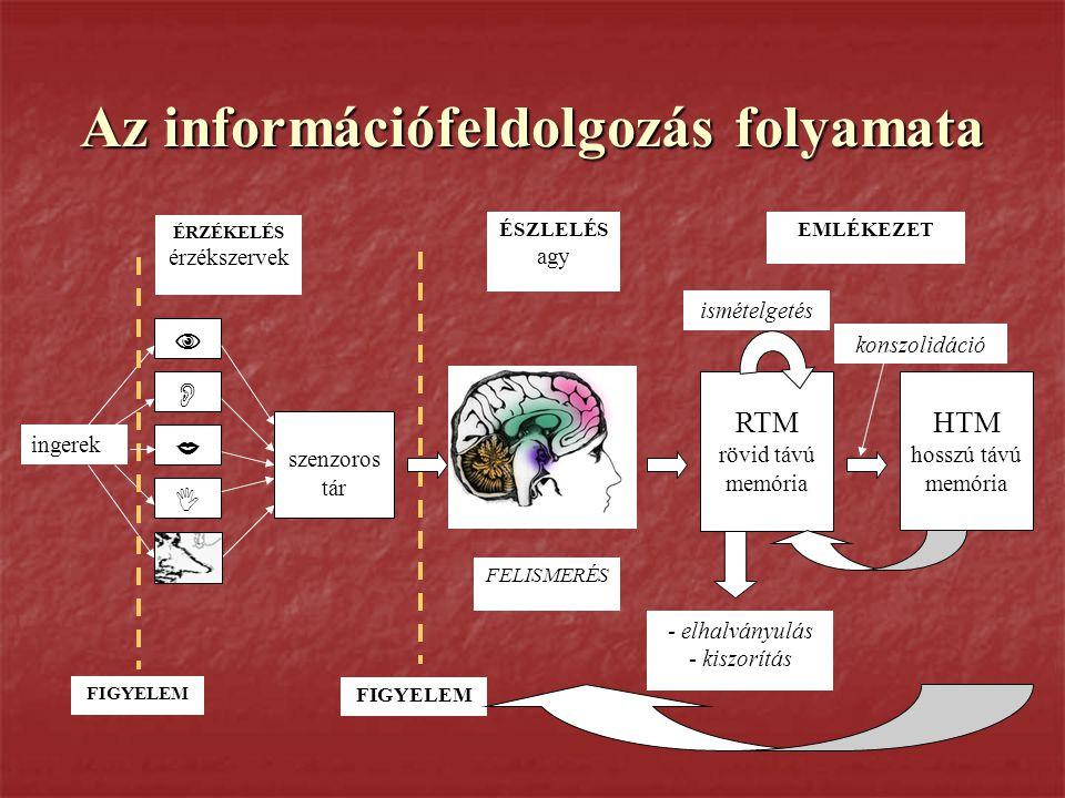 Az információfeldolgozás folyamata