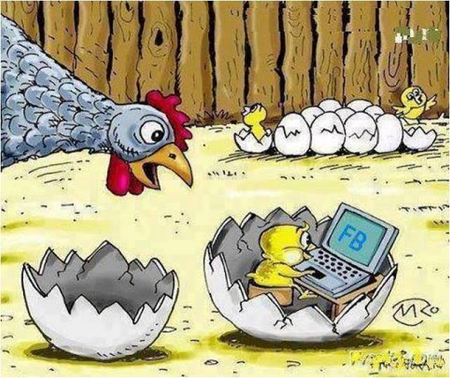 Már a tojásban is facebookoznak