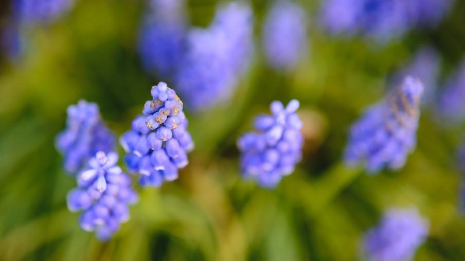 flowers 00009.jpg