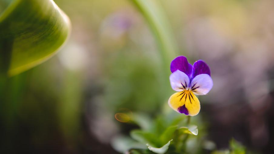 flowers 00076.jpg