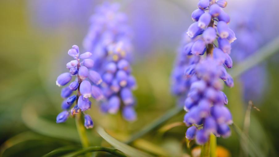 flowers 00079.jpg