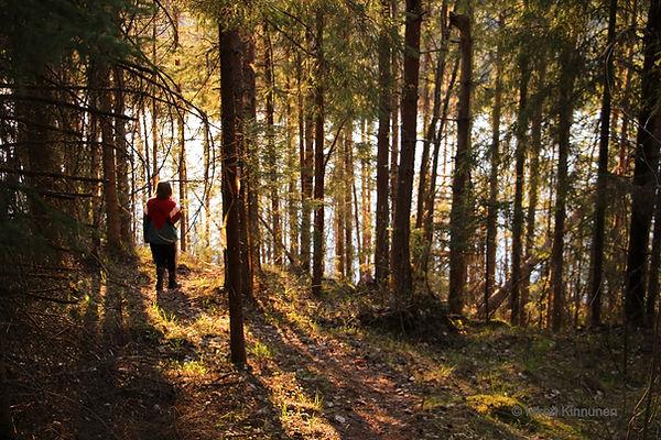 Kuvassa näkyy lampi puiden lomasta. Ilta-aurinko siivilöityy kultaisena puiden takaa.