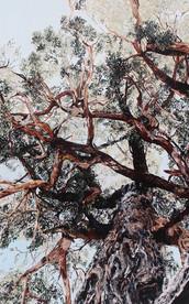 The Evolution Tree Customised Print