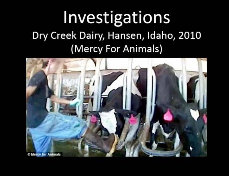 Dry Creek Dairy, Animal Abuse, Hansen, Idaho, 2010