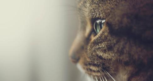 The Death of NH's Animal Cruelty Bill: Part II, Felony-Level Cruelty