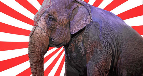 The Circus Challenge: Do Not Buy Circus Tickets Before Reading This