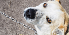 Opposition To NH Anti-Animal Fighting Bill Doesn't Hold Up
