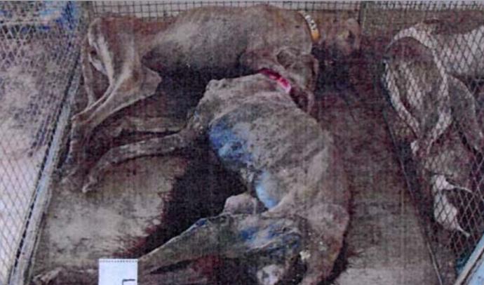Dead Greyhounds, Found at Ebro Greyhound Park, 2010