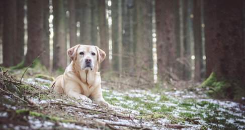 NH Labrador Trial: Sorting Through the Confusion of Day 1