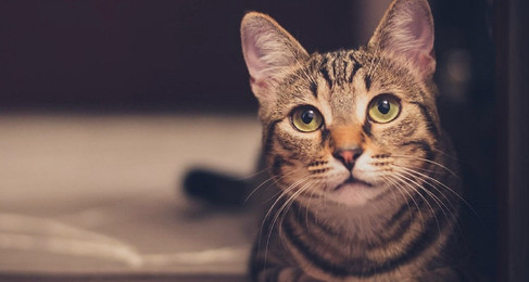 NH Committee of Conference Puts Crucial Feline Leukemia Exemption 'On Hold' For Further Review