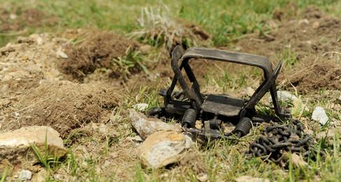 Dog Caught In Hunting Trap, Merrimack PD Investigates