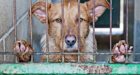 The Death of NH's Animal Cruelty Bill: Part V, Inspections