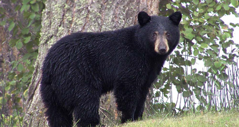 House To Vote On Potentially Detrimental Wildlife Bill, HB 1339