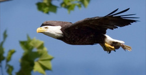 Defending The Endangered Species Act & Future Generations