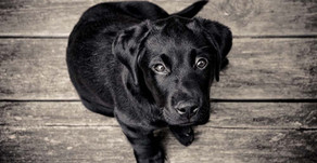NH Animal Cruelty Prevention: Part II, SB 161