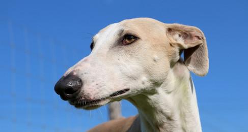 FL: 10 Reasons to Vote YES on Dog Racing Ban, Amendment 13
