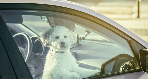 What To Do If You See A Pet In A Hot Car, or Left In The Heat