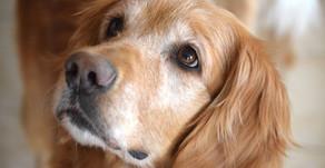 Enhancing NH Animal Cruelty Law, HB 1560-FN