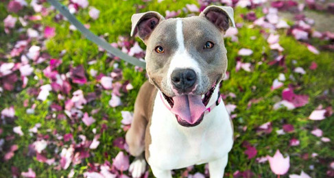 NH Adopts Animal Fighting Paraphernalia Ban