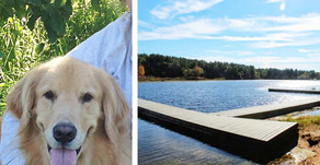 Does Merrimack Dog Drowning Warrant Felony Charges?