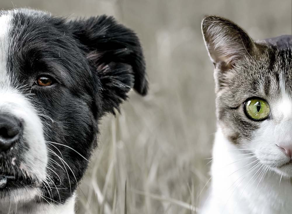 Dog and cat side by side with grass by Gina Scrofano Straight Twist