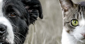 NH Animal Cruelty Prevention: Part I, SB 77-FN