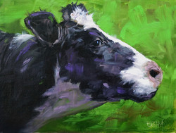 profile of a dairy cow 01