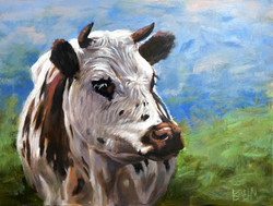 brown and white cow 01
