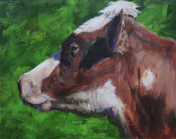profile of a dairy cow 02