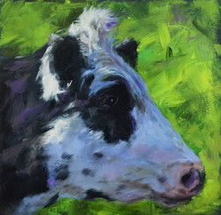 profile of a dairy cow 03