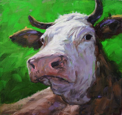 brown and white cow 02
