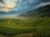 agriculture-1807570_1280.webp