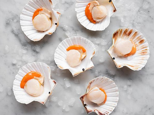 Scallops-Fresh scallops in the half shell sold by the dozen