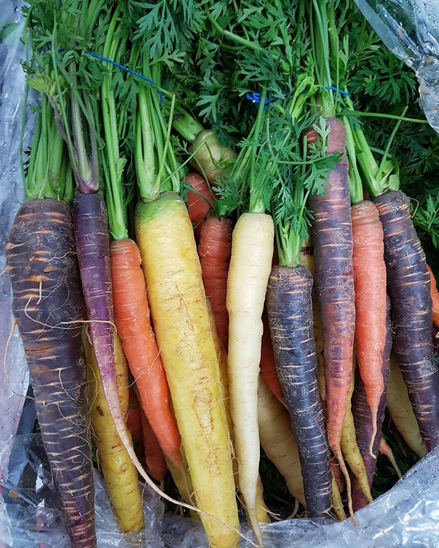 Beautiful bunches of Heritage Carrots
