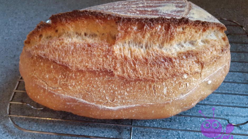 Lievito Madre Krusten Brot