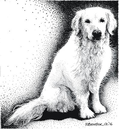golden retriever pet portrait
