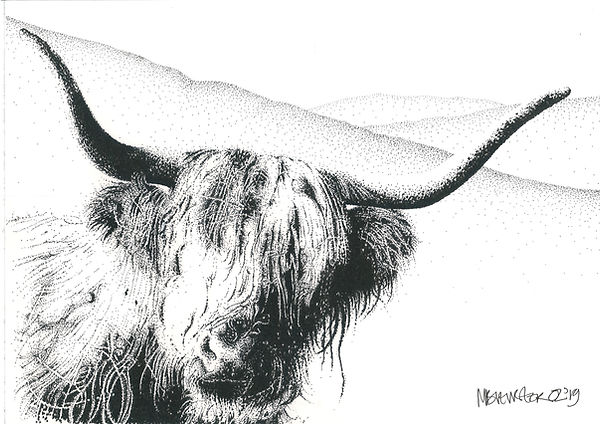 Original black ink dot drawing of a highland bull in the Cambrian Mountains