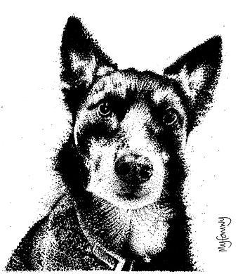 Black ink dot pet portrait of a pet Alsatian-Border Collie cross