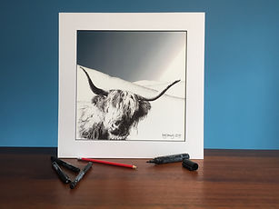 Black ink dot mounted print of a highland cow on Plynlimon 40 x 40 cm