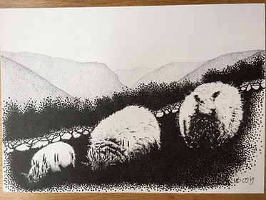 3 Speckledface sheep + Aran Fawddwy original black ink dot drawing.jpg