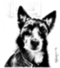 sheepdog cross pet portrait