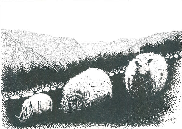 Original black ink dot drawing of 2 Welsh Mountain sheep and a lamb with Aran Fawddwy