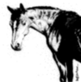bay mare pet portrait